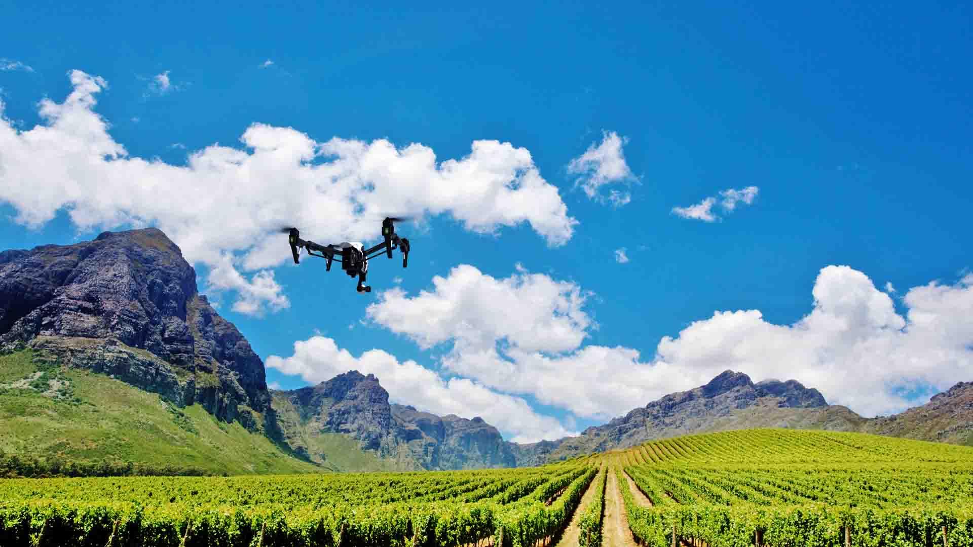 drone_vineyard_background