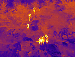 drone_thermal_forest